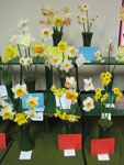 A display of daffodils